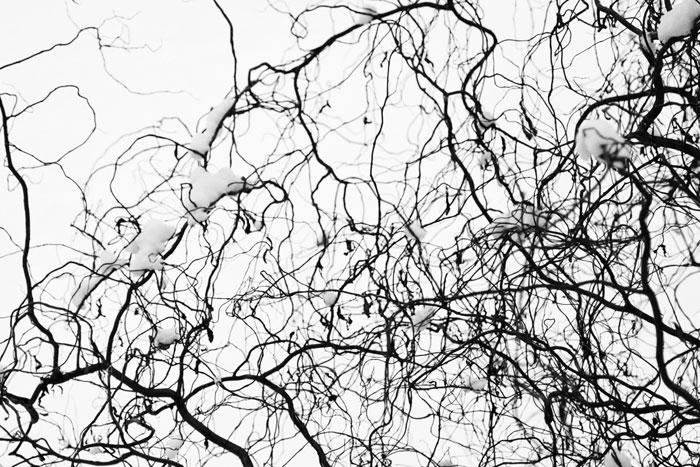 fotografia artystyczna gałęzi w zimie