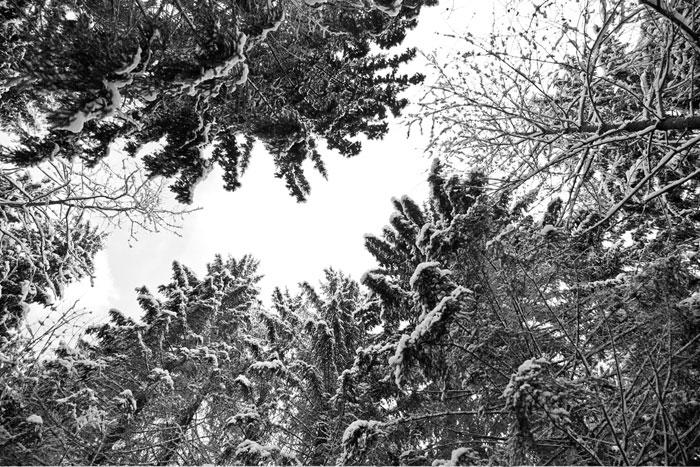 fotografia artystyczna lasu