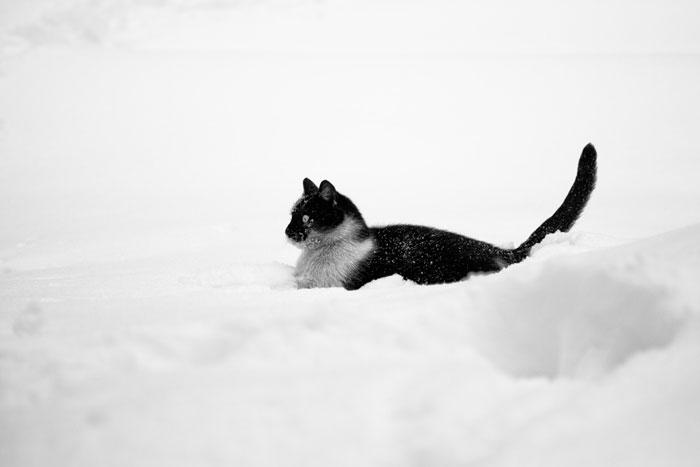 kot w śniegu na fotografii