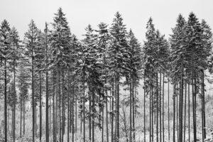 fotografia zimowy las