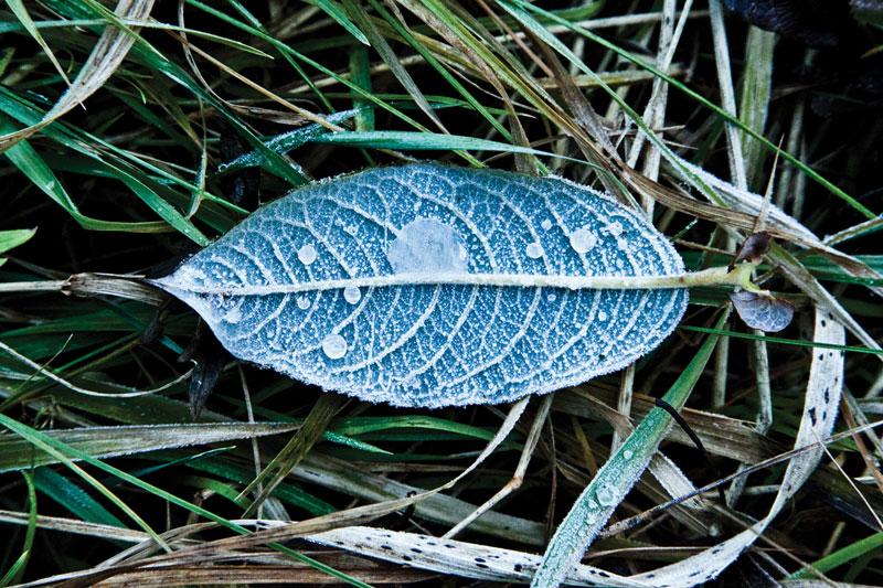 Listek oszroniony, natura jako fotografia artystyczna