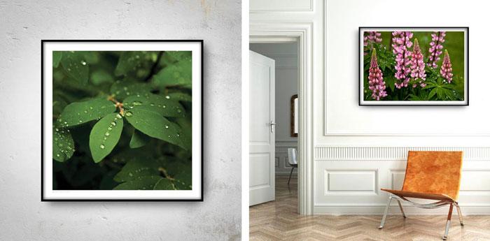 plakaty z motywem natury we wnętrzach