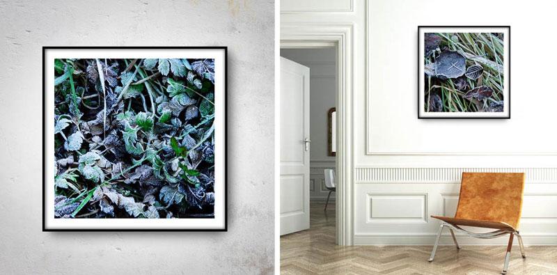 plakaty i wydruki artystyczne zdjęć oszronionych liści