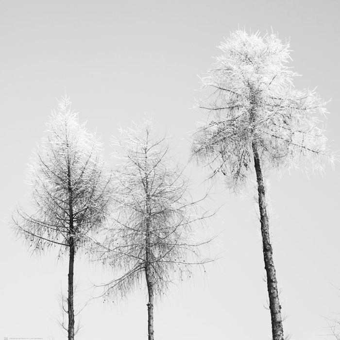 fotografia artystyczna drzew