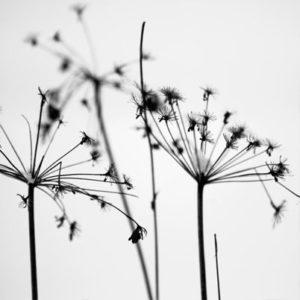 fotografia zimowa natury i gałęzi
