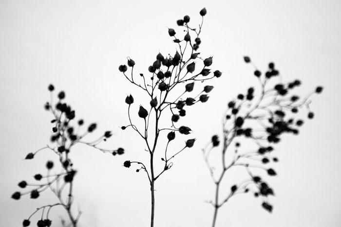 fotografia zimowych roślin